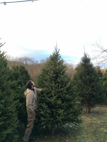 CT Grown Pre-Cut Christmas Trees