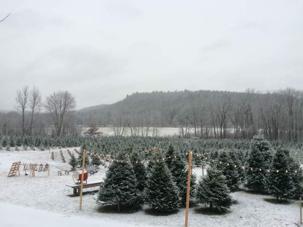 Maple Hollow Farm in Snow