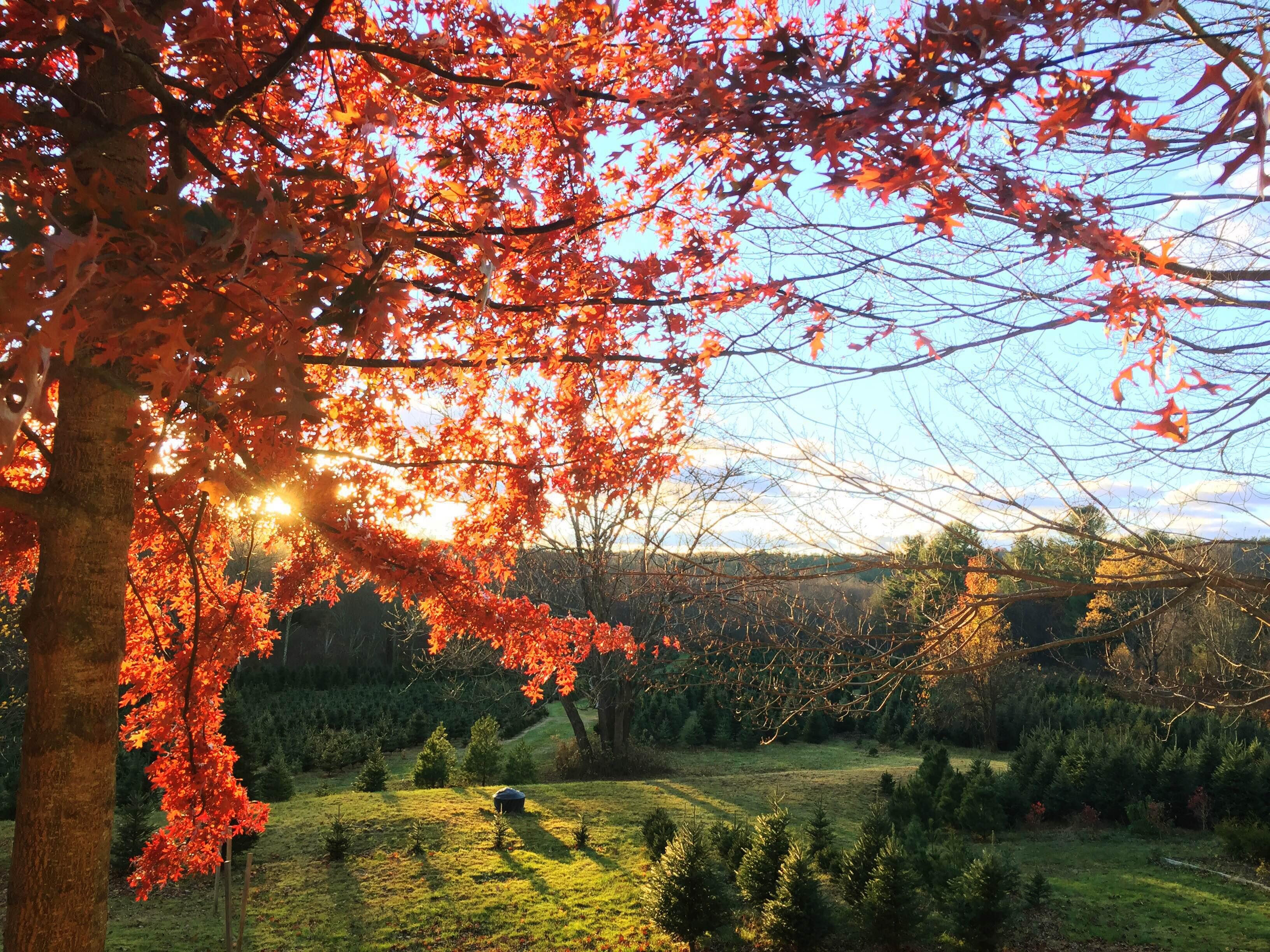 November At Maple Hollow Farm